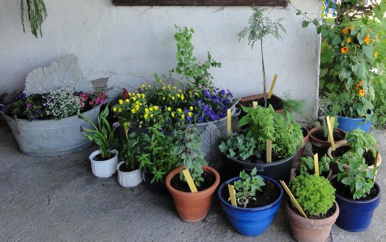 Krauter Anbauen Flower Ranch