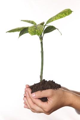 Kräuter Anbauen Krauter Pflanzen Topf Anbauen